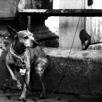 """dogfog """"zimno."""" (2009-05-24 20:12:41) komentarzy: 19, ostatni: Mój pies też ma taką kostkę;D"""