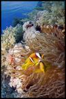 """Greg Saint """"portret rodzinny..,"""" (2009-06-06 15:38:25) komentarzy: 8, ostatni: Nemo"""