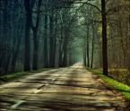 """majkim """"autobana na jajosty"""" (2009-06-06 16:11:30) komentarzy: 5, ostatni: 10 za kolory, Mam w okolicy podobny las - Puszcza Niepołomicka - też prowadzi tam taka droga, jesienią  fajne rzeczy się tam dzieją"""