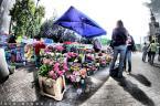 """Aruan.pl """"Kwiaciarka"""" (2009-06-08 07:31:10) komentarzy: 2, ostatni: ładna kolortystyka i kard. w takim rybim oku brakuje mi tylko FreeRidera x]x] pozdrawiam"""