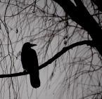 """corundum """"ptaki"""" (2009-06-08 19:15:38) komentarzy: 88, ostatni: klimatyczne"""
