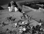 """w.wojciechowska """"hodowca gołębi"""" (2009-06-12 15:03:52) komentarzy: 0, ostatni:"""