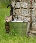 """da_tomala """"...zalotne..."""" (2009-06-18 18:59:27) komentarzy: 8, ostatni: kocie szczęście, fajny kadr :)"""