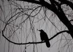 """corundum """"cierpliwie siedząc na drzewach ..."""" (2009-06-22 19:35:01) komentarzy: 57, ostatni: W.R.O.N."""