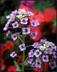 """beige """"..."""" (2009-06-23 22:17:39) komentarzy: 13, ostatni: raczej piszę to co myślę... kto inny, z mniejszym dorobkiem, dostałby za takie zdjęcie delikatne """"zjebki"""". nie pasuje mi. za dużo jakoś tego czegoś (nie znam się na kwiatkach)."""