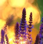 """zippuro """""""" (2009-06-25 12:00:15) komentarzy: 5, ostatni: Mi bardzo się podoba, szczególnie kolory i świetliste rozmycia w tle :)"""
