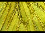 """Karczewski """"Lepidoptera - czyli motyl inaczej ;)"""" (2009-06-28 16:47:02) komentarzy: 11, ostatni: tadek66 [2009-06-30 11?? -> o tym samym pomyślałem:)"""