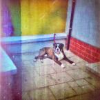 """kamron """""""" (2009-07-01 18:51:27) komentarzy: 19, ostatni: Paleta z psem i rynną."""