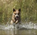 """Maskotka """"Pies brodzący"""" (2009-07-18 19:19:03) komentarzy: 5, ostatni: Niezłe"""