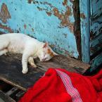 """macieknowak """"Kocia sjesta"""" (2009-08-01 20:43:22) komentarzy: 6, ostatni: Szkoda,że ucięte.Pozdrawiam"""