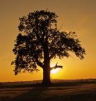 """ro4 """""""" (2009-08-06 15:32:44) komentarzy: 7, ostatni: Lubię pozorną walkę światła z konturem..."""