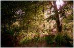 """Gallows Pole """"*  *  *"""" (2009-08-11 18:28:44) komentarzy: 1, ostatni: dobre podejście do ''malowania światłem''"""