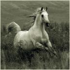 """Ronceval """""""" (2009-08-12 16:29:06) komentarzy: 22, ostatni: Radość wolności!"""