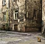 """cocacola """"królestwo Rudego"""" (2009-08-24 07:58:24) komentarzy: 66, ostatni: Piękny ten Lublin..."""