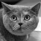 """Marta Posyłek """""""" (2009-08-29 19:31:21) komentarzy: 10, ostatni: fajowe... :) tak sie kiedys dzieciom rysowalo kota, chodzi mi o ksztalt glowy :))"""