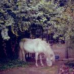 "jatomek ""..."" (2009-09-02 23:37:31) komentarzy: 10, ostatni: o-koń:)"