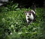 """luka_s_z """"na łowy"""" (2009-09-03 17:39:42) komentarzy: 3, ostatni: ;) dobre kocie ujęcie."""