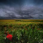 """makama """"bez tytułu"""" (2009-09-03 20:39:28) komentarzy: 33, ostatni: i kolory piknie grają i parasol też"""