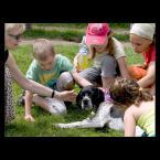 """Mieszko Pierwszy """"pieskie życie .."""" (2009-09-11 16:49:45) komentarzy: 4, ostatni: Psiak, a patrzy wilkiem..."""