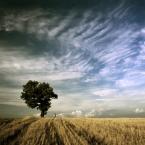 """tolek67 """""""" (2009-09-14 17:54:19) komentarzy: 19, ostatni: Niebo dopisało"""