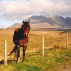 """superzocha """"oooo"""" (2009-09-15 17:12:59) komentarzy: 9, ostatni: brak nasycenia. takie kolory uchwyciłam, taki krajobraz Szkocji w maju"""