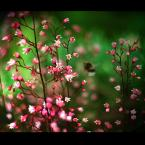 """amator_sliwek """"Czmiel w krainie kwiatów"""" (2009-09-15 21:01:20) komentarzy: 14, ostatni: moze nienajlepsze technicznie ale bardzo mi sie podoba"""