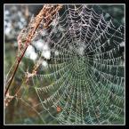 """popo007 """"------"""" (2009-09-15 21:11:59) komentarzy: 8, ostatni: Piękna sieć."""
