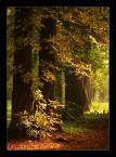 """ilcia """"#"""" (2009-09-16 18:42:25) komentarzy: 17, ostatni: piekna kompozycja:)"""