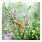 """Em B. """"Dziwnowo - Opowieści leśne"""" (2009-09-20 12:40:06) komentarzy: 11, ostatni: delikatnosc bije z tej pracy"""
