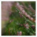 """Em B. """"Dziwnowo - Opowieści leśne 4/4"""" (2009-09-22 20:06:28) komentarzy: 12, ostatni: przyjemne bardzo"""