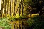 """ParamPam """"Mój las"""" (2009-09-23 21:32:55) komentarzy: 12, ostatni: chyba dlatego, że niczego nie zmieni ;)♠"""