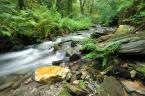 """JeanetteG """"***"""" (2009-09-30 20:10:28) komentarzy: 9, ostatni: Śliczne zdjęcie... Pięknie wyszła Ci ta woda:) Pozdrawiam:)"""