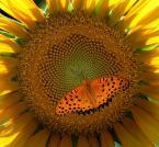"""Willie Sunday """"Idź złoto do złota..."""" (2009-10-03 09:05:21) komentarzy: 15, ostatni: super kompozycja :)"""