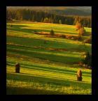 """ilcia """"cieniem malowane"""" (2009-10-03 18:54:42) komentarzy: 8, ostatni: Ładnie mu."""