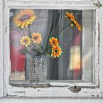 """MikE_ZorbA """"plastikowych słoneczników czar..."""" (2009-10-03 19:53:14) komentarzy: 4, ostatni: ;)"""