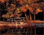 """wedrowiec1 """"Jesień w arboretum"""" (2009-10-04 20:03:21) komentarzy: 9, ostatni: pieknie"""