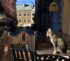 """cocacola """"Miedzynarodowy dzien kota"""" (2009-10-12 20:13:23) komentarzy: 36, ostatni: ciepło w słoneczku :) fajne :)"""