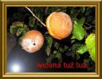 """matuszewska """"BŁYSKOTLIWY GNIOT !!!"""" (2009-10-16 08:29:18) komentarzy: 85, ostatni: wiosna zbliża się jesienią. Ciekawe"""
