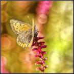 """adamix69 """"..."""" (2009-10-16 23:26:53) komentarzy: 3, ostatni: fajne kolorki, choć trochę przeszkadza mi to skrzydełko ..."""