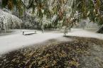 """robert37 """"Jesień i zima..."""" (2009-10-17 17:48:30) komentarzy: 14, ostatni: tam już padał śnieg? Kurczę, a myślałam, że Kraków nie leży na biegunie..."""