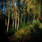 """irmi """"jest las"""" (2009-10-19 20:54:39) komentarzy: 2, ostatni: Dobry efekt"""
