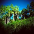 """irmi """"jest las"""" (2009-10-19 20:56:22) komentarzy: 5, ostatni: dobry fot :)"""