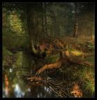 """pawello91 """"Leśne opowieśći..."""" (2009-10-22 13:15:32) komentarzy: 45, ostatni: fajnie przedstawiony bałagan"""
