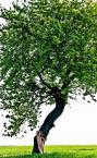"""2MM """"schowana.."""" (2009-10-22 22:38:12) komentarzy: 3, ostatni: ciekawie by to mogło wyglądać z całym drzewem w kadrze... ona taka malutka.. ono takie duże"""