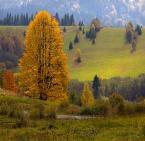 """Marta Posyłek """"Bieszczadzka jesień"""" (2009-10-23 16:33:29) komentarzy: 51, ostatni: A Bieszczady są piękne, zwłaszcza jesienią ..."""