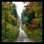 """amator_sliwek """"jesienna droga"""" (2009-10-25 21:59:26) komentarzy: 1, ostatni: przyjemne"""