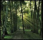 """Adam Pol """"Zielone ostatki dla wszystkich:)"""" (2009-10-26 20:41:24) komentarzy: 15, ostatni: bdb."""