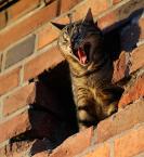 """da_tomala """"...furia..."""" (2009-10-26 22:16:50) komentarzy: 14, ostatni: lew podwórkowy"""