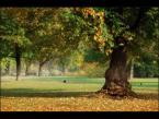 """mysliciel """""""" (2009-10-28 21:24:47) komentarzy: 4, ostatni: Ładnie podoba misie, ładna kompozycja to drzewko tak fajnie odseparowane przez GO od całej reszty i ta mgiełka też całkiem na miejscu."""