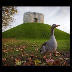"""Mieszko Pierwszy """"Head of Castle"""" (2009-10-31 23:03:31) komentarzy: 36, ostatni: +"""